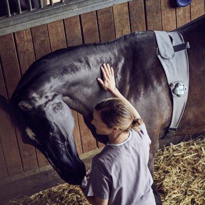 Pferd mit Tierarzt in der Box; Bildquelle: Piavita AG
