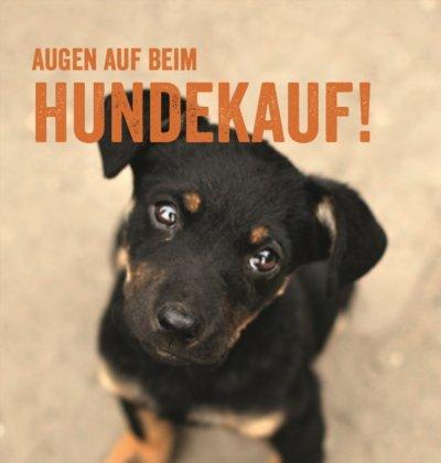 Augen auf beim Hundekauf; Bildquelle: BLV