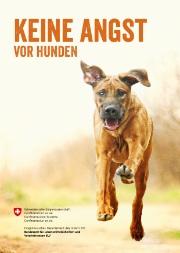 Neue Broschüre: Keine Angst vor Hunden