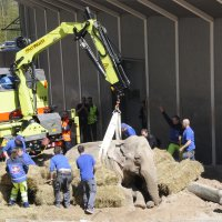 Feuerwehr hilft Elefant Druk aufzustehen; Bildquelle: Zoo Zürich, Robert Zingg