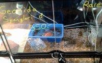 Geoemyda spengleri (Chinesische Zacken-Erdschildkröte): Winziges Wasserbecken in kleinem Terrarium ohne Rückzug; Bildquelle: Schweizer Tierschutz STS