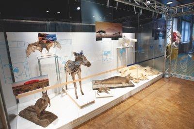 Rotnackenwallaby, Graukopfflughund, Steppenzebra, Zebramanguste, Seehund, Polarfuchs und Eisbär: Jedes Tier säugt den Nachwuchs auf seine eigene Art; Bildquelle: Zoologisches Museum UZH