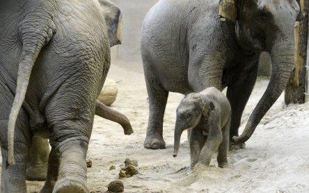 Der jüngste Elefant im Zoo Zürich heisst Ruwani   VET-MAGAZIN.com